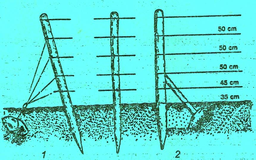 Столбы для виноградника своими руками 51